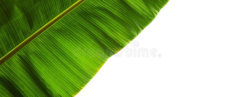 Зеленая часть лист изолированная на белизне стоковое изображение
