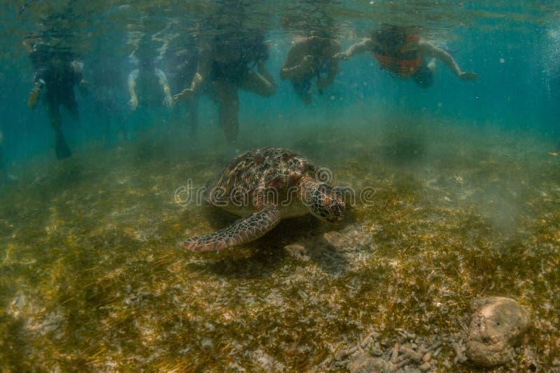 Зеленая черепаха и девушка стоковые фотографии rf