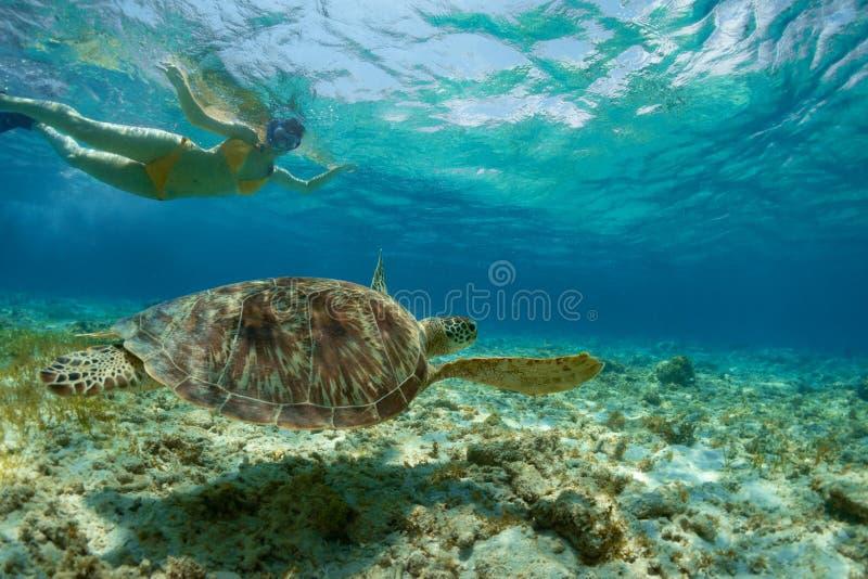 Зеленая черепаха и девушка стоковая фотография rf
