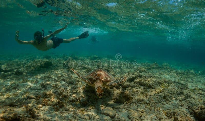 Зеленая черепаха и snorkler стоковая фотография