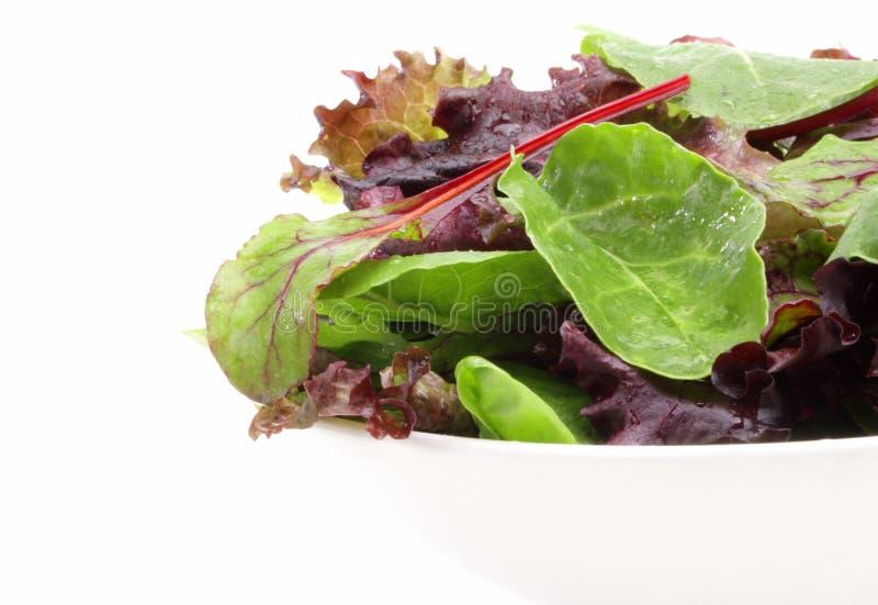зеленеет смешанный салат стоковая фотография