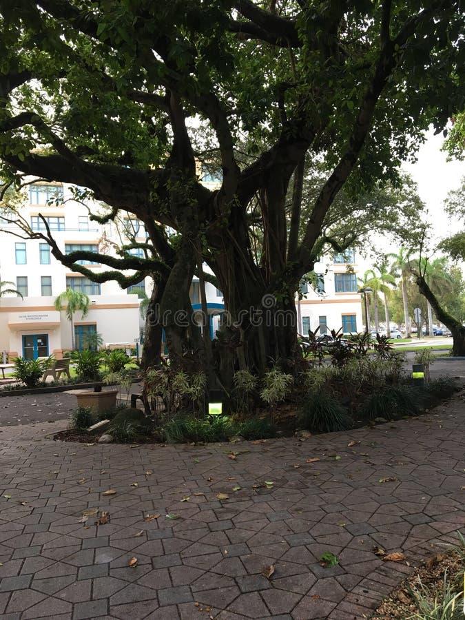 Зеленого цвета дерева неба дерева уровня земли природа красивого естественная стоковое фото rf