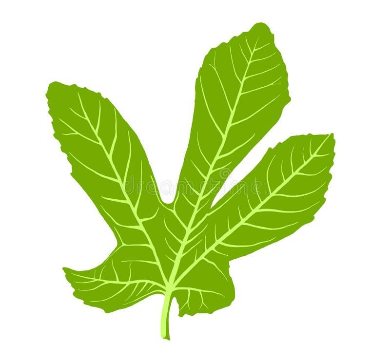 Зеленое большое летание фигового листка от дерева стоковые фотографии rf