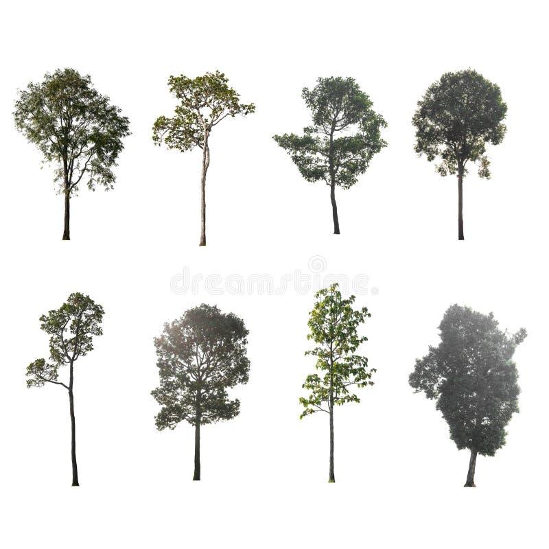 Зеленое дерево на изолированный на белой предпосылке Собрание деревьев стоковые изображения
