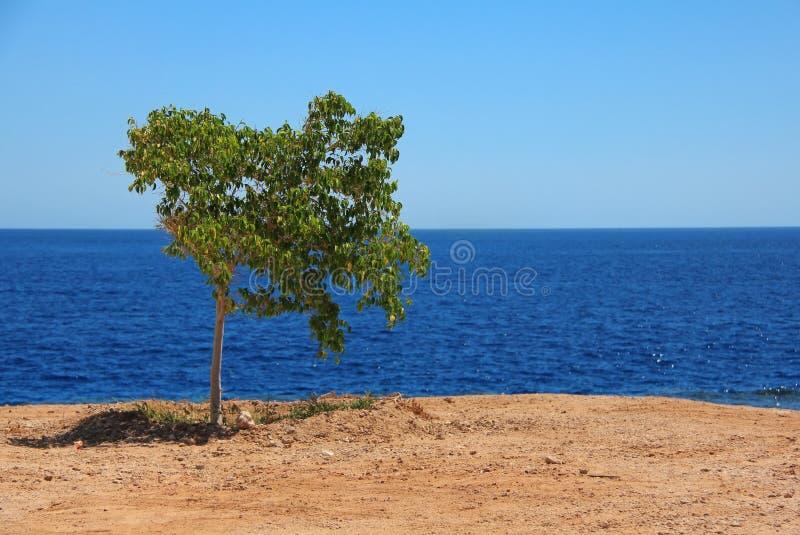 Зеленое дерево на seashore стоковая фотография