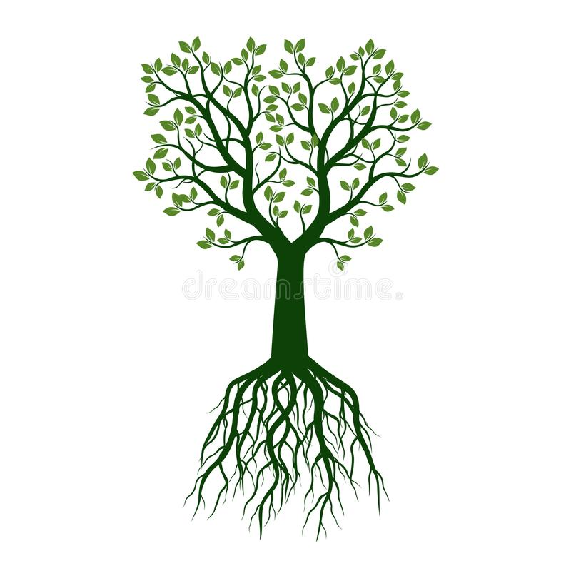 Зеленое дерево с листьями и корнями также вектор ...