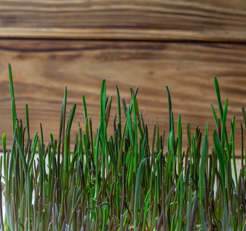 Зеленое здоровое питание диеты фитнеса семенозачатка пшеницы естественное стоковое фото