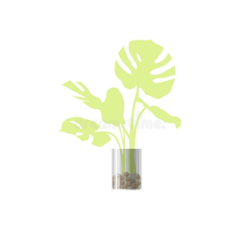 Зеленое комнатное растение в баке стоковые фото