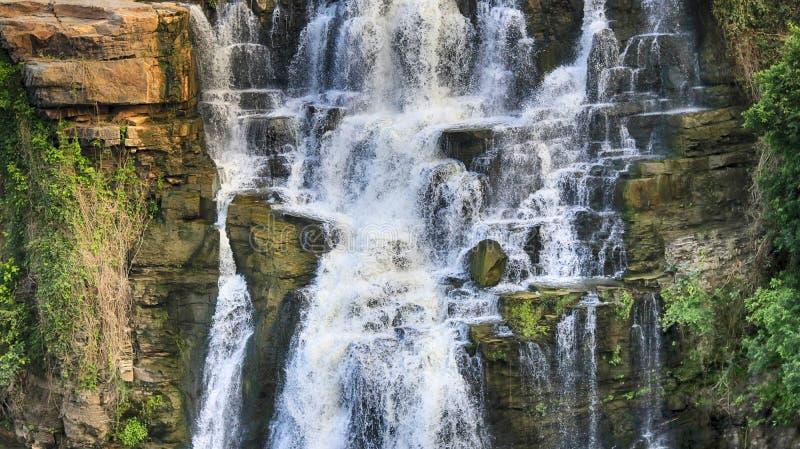 Зеленое падение самой лучшей воды природы стоковые изображения