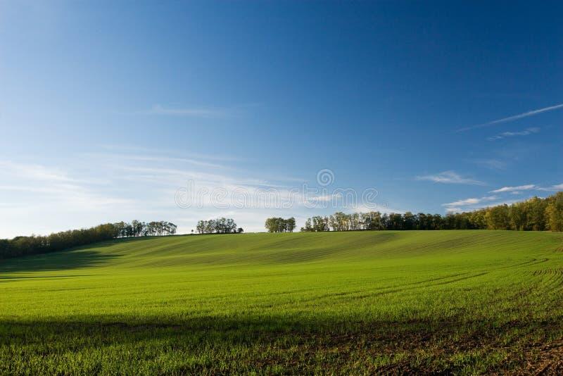 Зеленое поле и голубое небо на заходе солнца стоковое фото rf