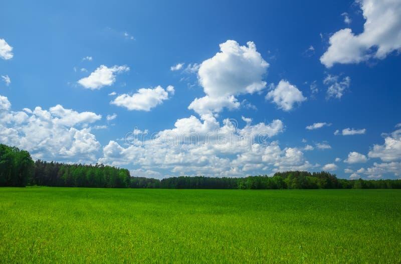 Зеленое поле и красивое голубое облачное небо с светлыми облаками стоковые фотографии rf
