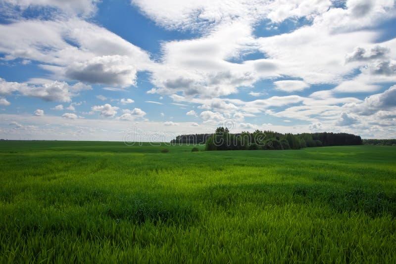 Зеленое поле и красивое голубое облачное небо с светлыми облаками стоковое фото rf