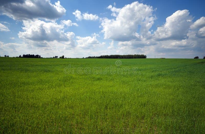 Зеленое поле и красивое голубое облачное небо с светлыми облаками стоковые изображения rf