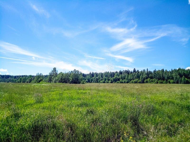 Зеленое поле с лесом на горизонте и голубом небе с облаками стоковая фотография rf