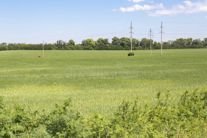 Зеленое поле с линией электропередач стоковые фотографии rf