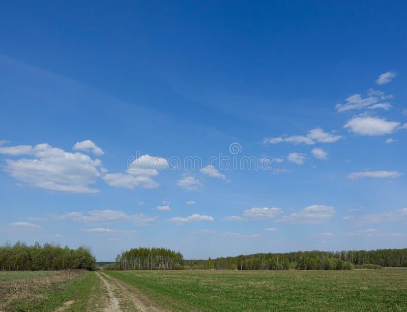Зеленое поле с проселочной дорогой, и голубое небо с облаками Красивый сельский ландшафт стоковые фотографии rf