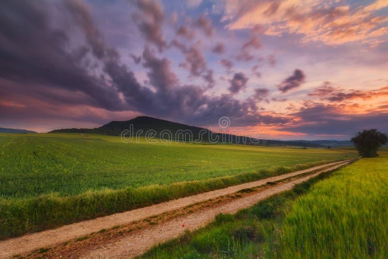 Зеленое поле хлопьев в Alava стоковые изображения rf