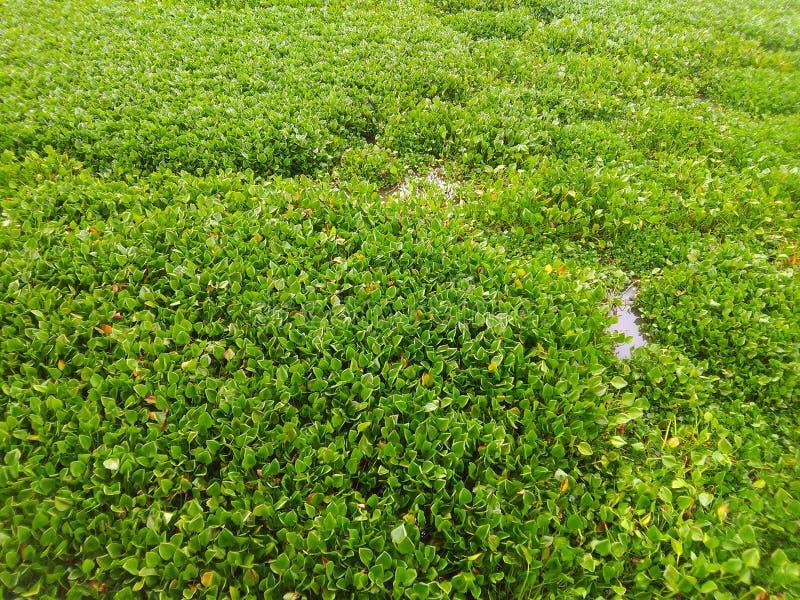 Зеленое поле цветков стоковое фото