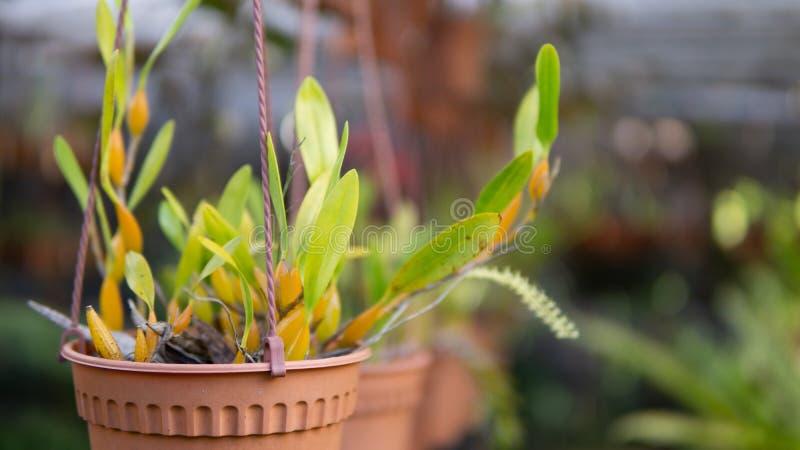 Зеленое растение в большом баке в саде стоковые фотографии rf