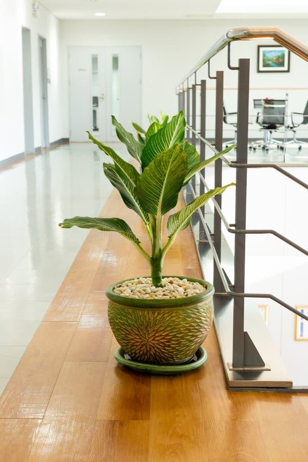 Зеленое растение в офисе стоковое фото rf
