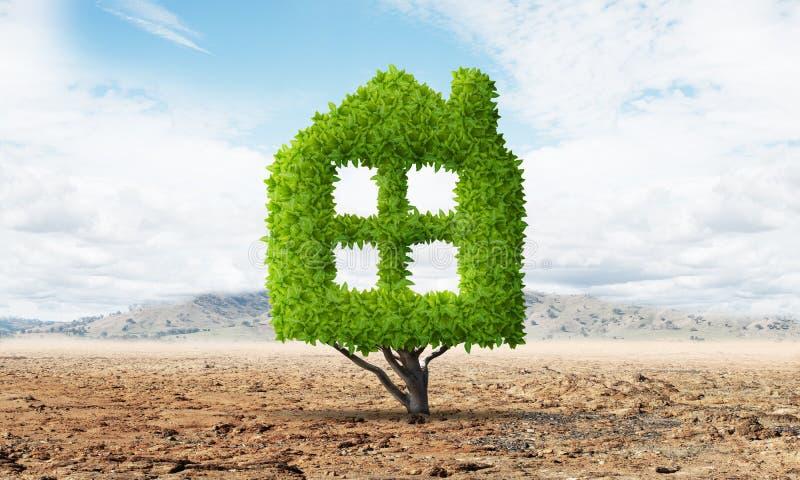 Зеленое растение в форме дома растет в пустыне иллюстрация штока