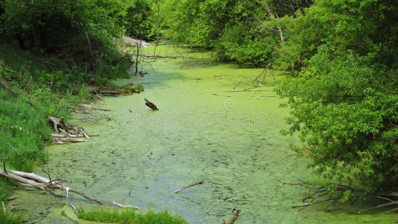 Зеленое река воды при внутренность упаденная деревьями окруженная зелеными деревьями стоковое фото rf