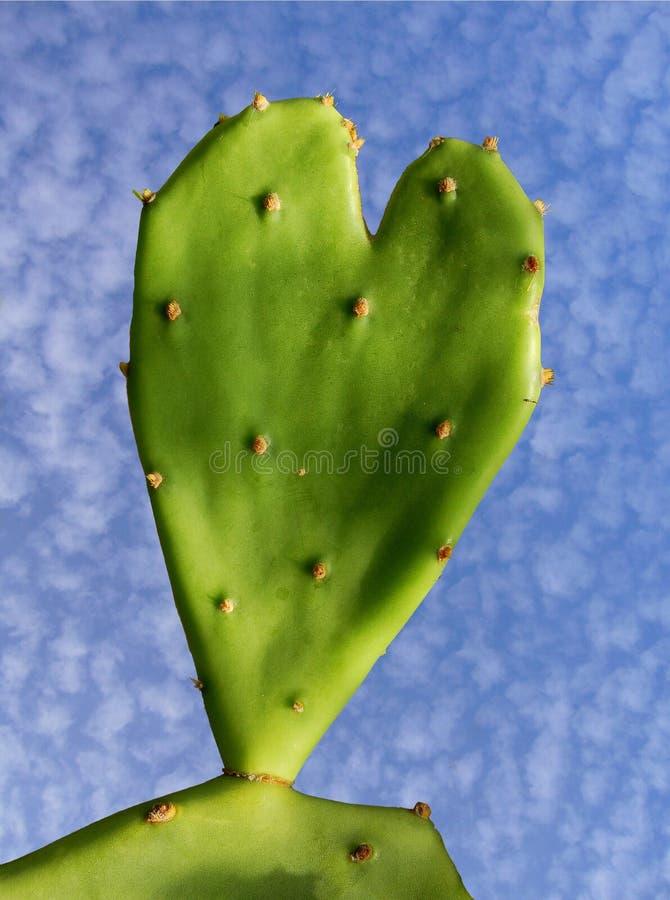зеленое сердце стоковое фото rf