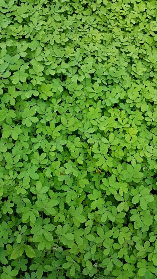 зеленое чисто стоковое изображение