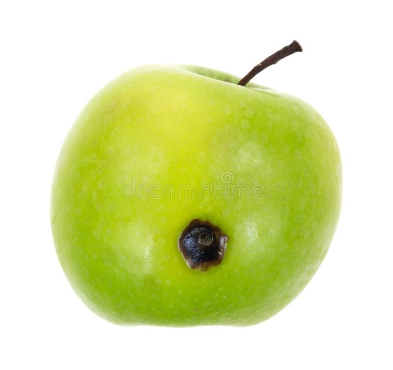 Зеленое яблоко с плохим пятном стоковое фото rf