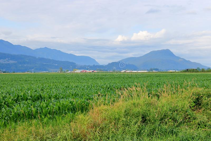 Зеленое Cropland в широкой открытой долине стоковые изображения