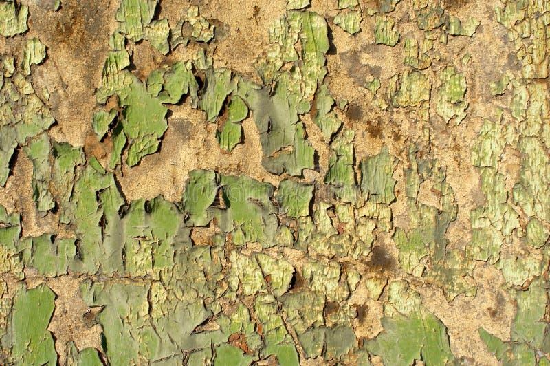 зеленое grunge стоковые изображения rf
