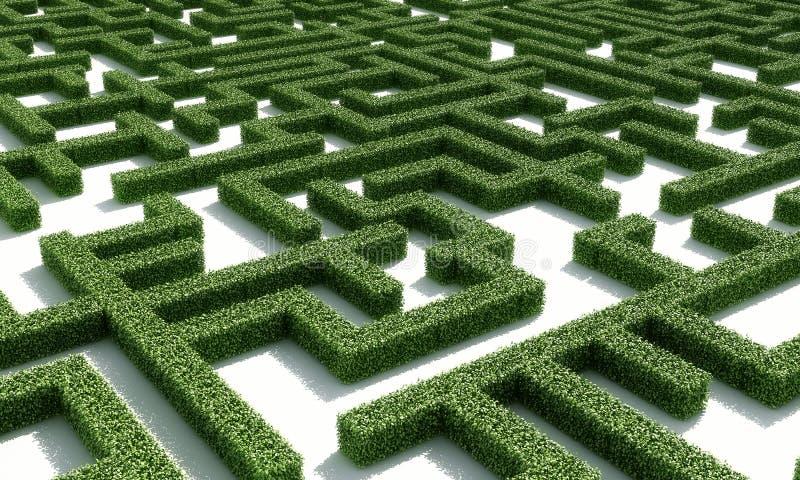 зеленое maze1 бесплатная иллюстрация
