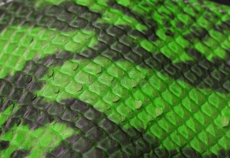 Зеленое Snakeskin стоковое фото rf