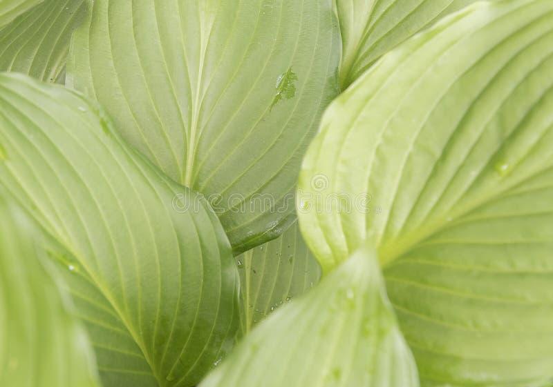 Зеленому заводу лист показывают вверх конец стоковые изображения rf