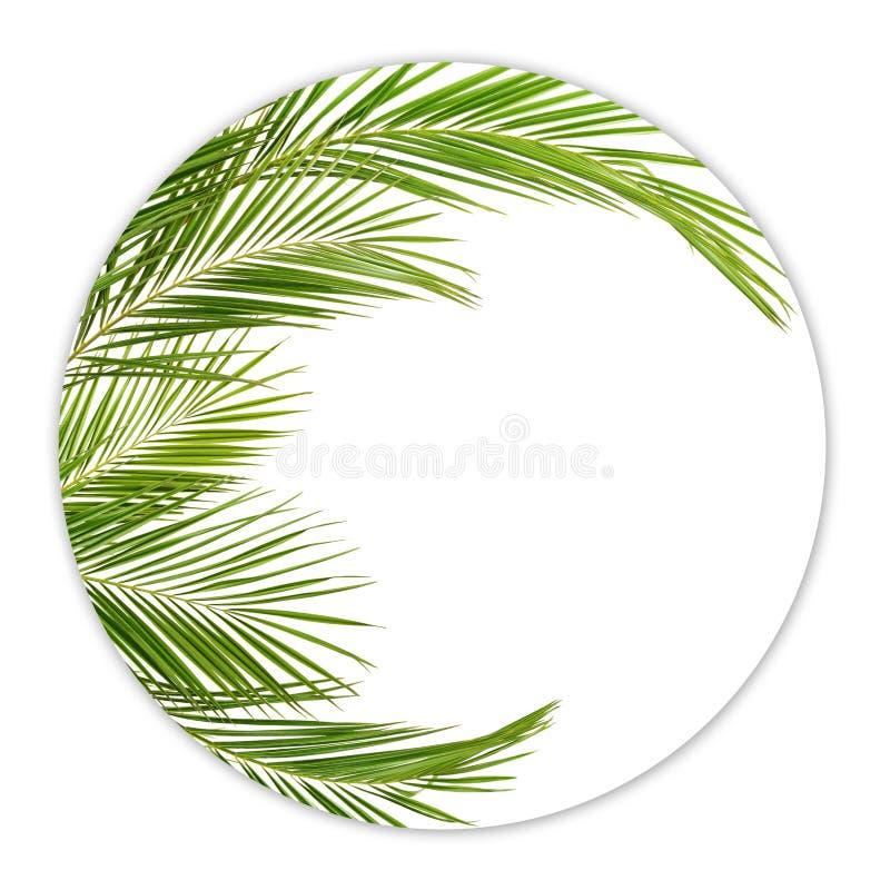 Зеленые ветви ладони в круглой рамке стоковые изображения rf
