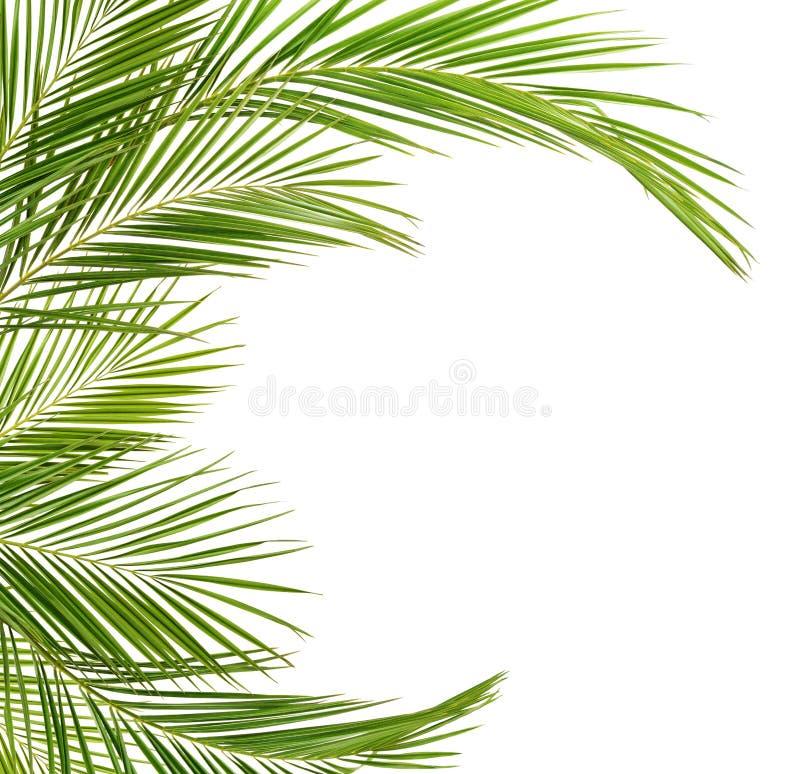 Зеленые ветви ладони в рамке формы свода стоковое фото