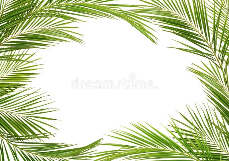 Зеленые ветви ладони в рамке стоковое фото rf