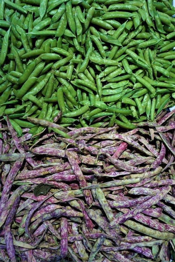 Зеленые горохи и фасоли faba стоковые изображения rf