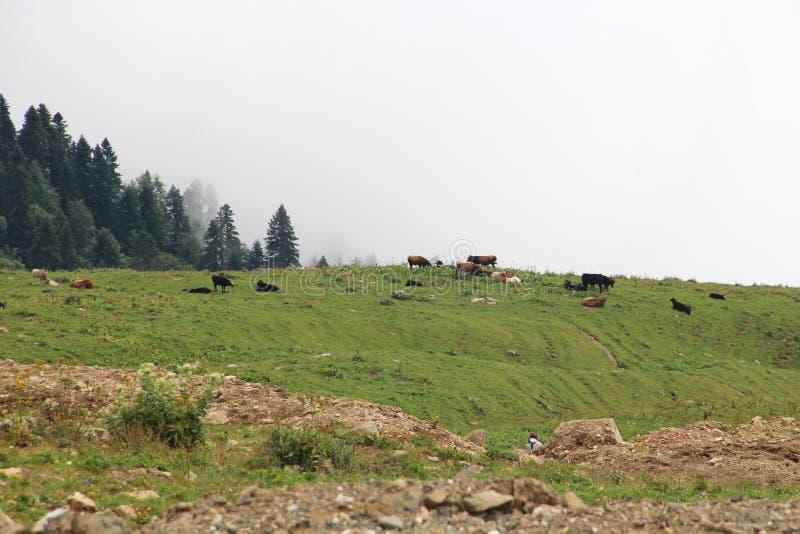 Зеленые горы и луга в облаках стоковые фото