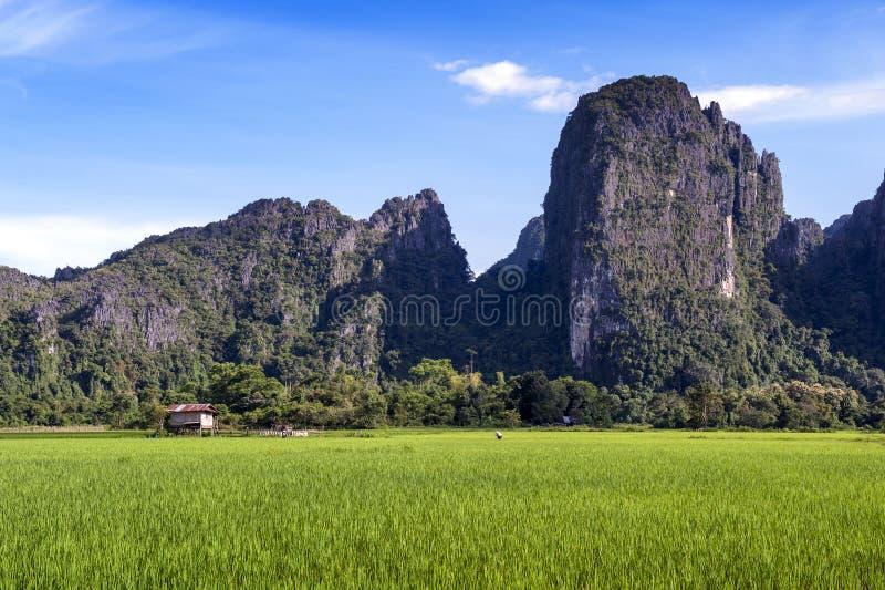 Зеленые горы поля и известняка рисовых полей в Vang Vieng, популярном городке курорта в Lao PDR стоковые фотографии rf