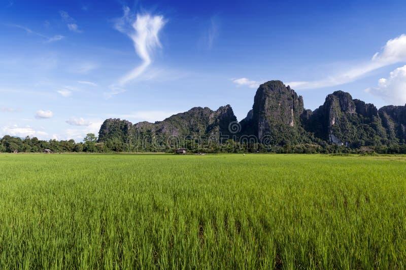 Зеленые горы поля и известняка рисовых полей в Vang Vieng, популярном городке курорта в Lao PDR стоковое фото rf