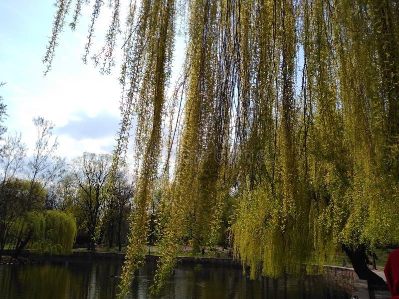 Зеленые деревья и голубое небо в парке города Ivano-Frankivsk, Украина Предыдущая весна стоковое изображение