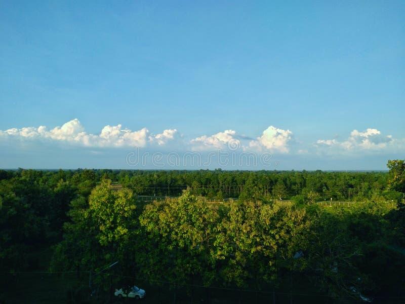 зеленые деревья, небо в дневном времени стоковое фото