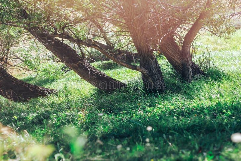 Зеленые деревья с солнечным светом и зеленая трава стоковая фотография rf