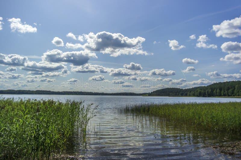 Зеленые деревья у озера в солнечный день с облаками на небе стоковые изображения rf