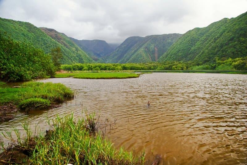 зеленые джунгли Гавайских островов стоковая фотография rf