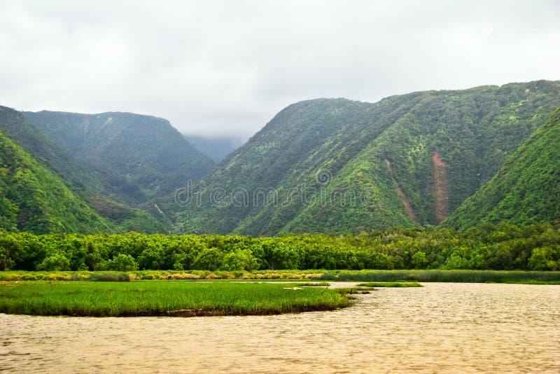 зеленые джунгли Гавайских островов стоковые фотографии rf