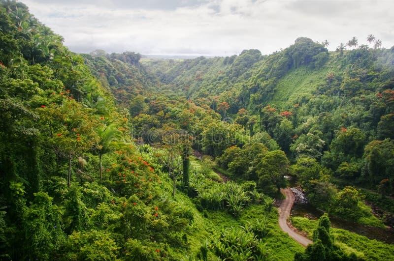 зеленые джунгли Гавайских островов стоковые изображения