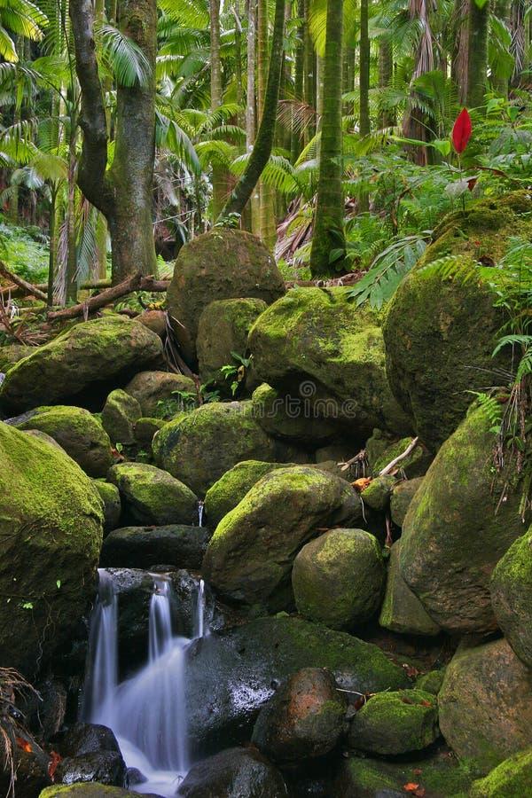 зеленые джунгли Гавайских островов стоковое изображение rf