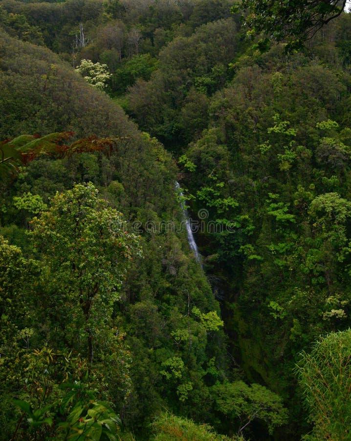 зеленые джунгли Гавайских островов стоковые изображения rf